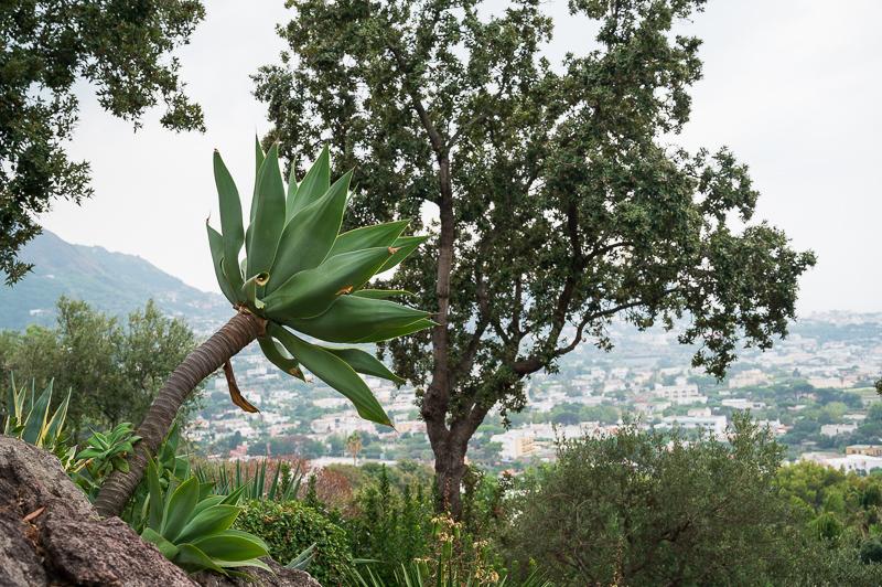 View from la Mortella 3
