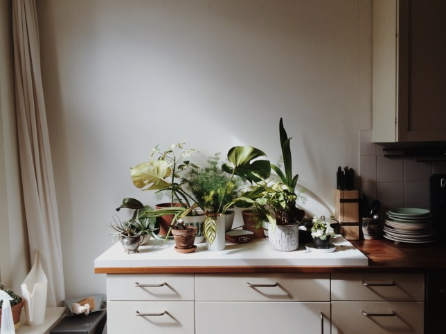 Kitchen corner plantgang.