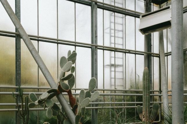 Hortus Botanicus Amsterdam, cacti in the desert glasshouse.