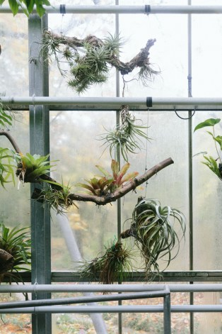 Hortus Botanicus Amsterdam, the epiphytes collection.