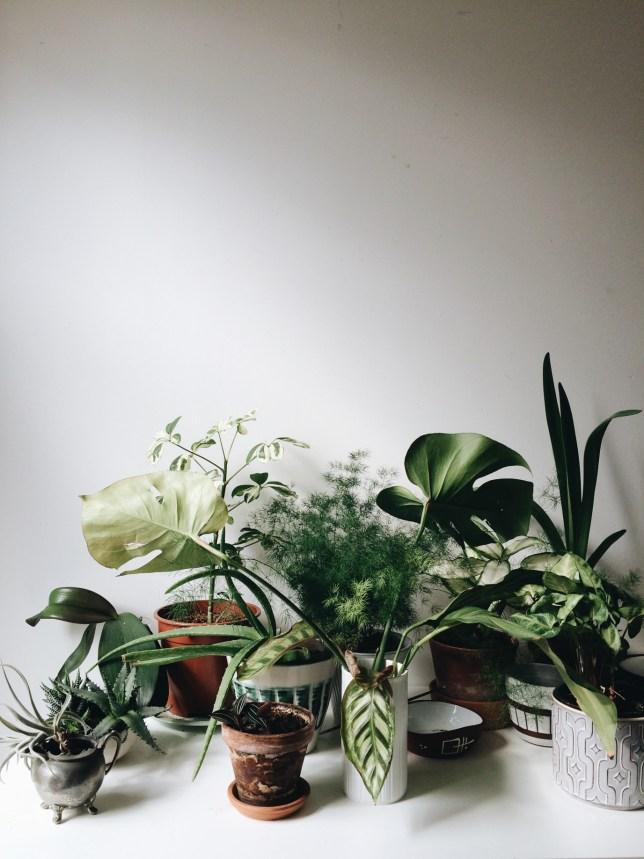 tillandsia, phalaenopsis, monstera deliciosa, schefflera, asparagus, calathea
