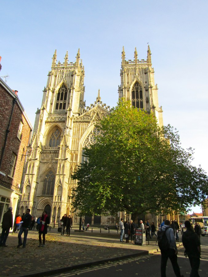 york-minster-tree.jpg