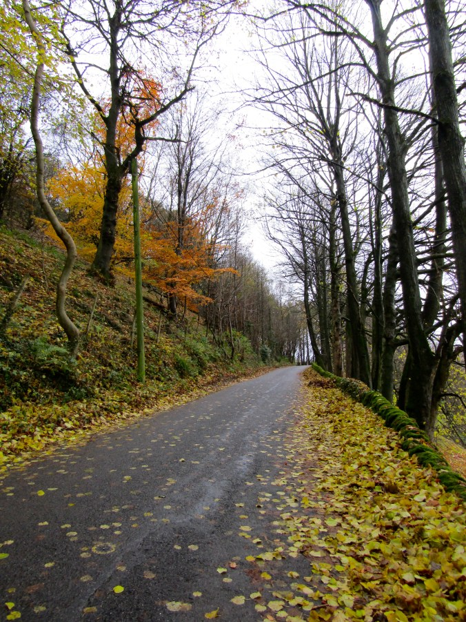 eyam-road-yellow-leaves.jpg