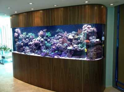 25 Awesome Aquariums You Wish You Owned