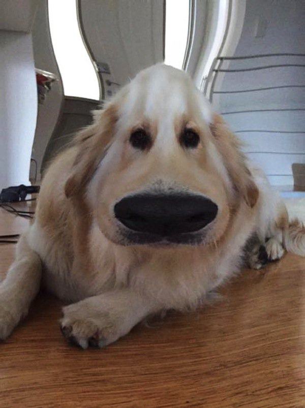 This Cool Snapchat Filter Will Make Your Dog Look Like