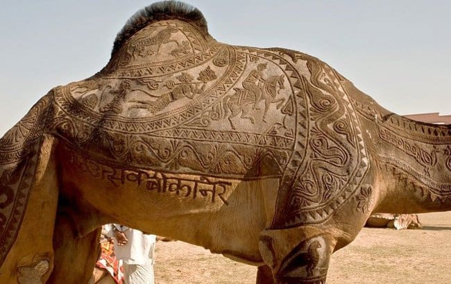 camel-hairstyle-rare-things-pictures