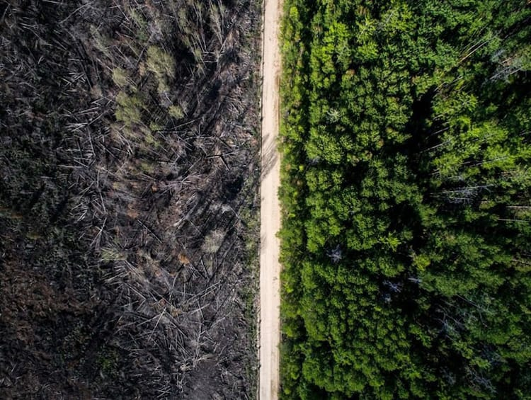 forest-fire-stopped-by-road-unbelievable-real-photos