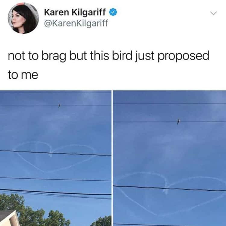 bird-proposing-visually-pleasing-photos
