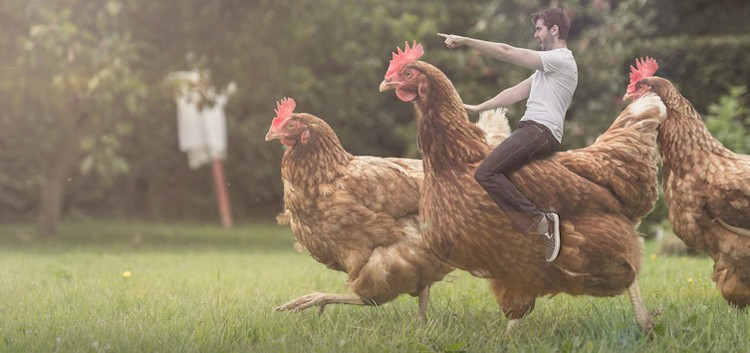 photoshop-man-riding-chicken-silly-things-bored-people-do