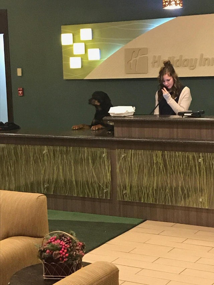 dog-receptionist-funny-proofs-earth-goofball