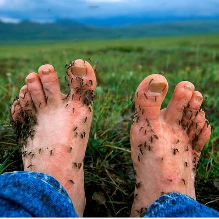 toes-full-mosquitoes-funny-proofs-earth-goofball