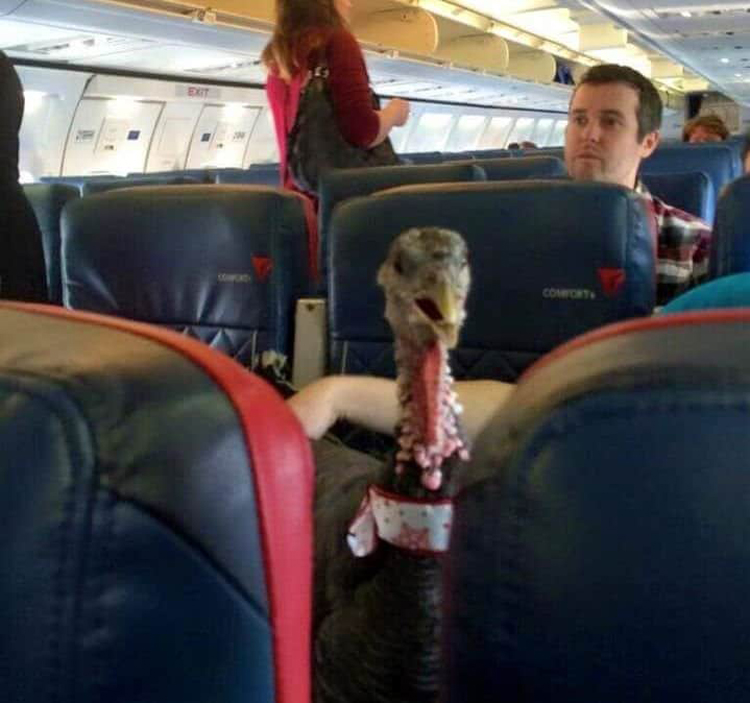 turkey-commuter-outrageous-photos