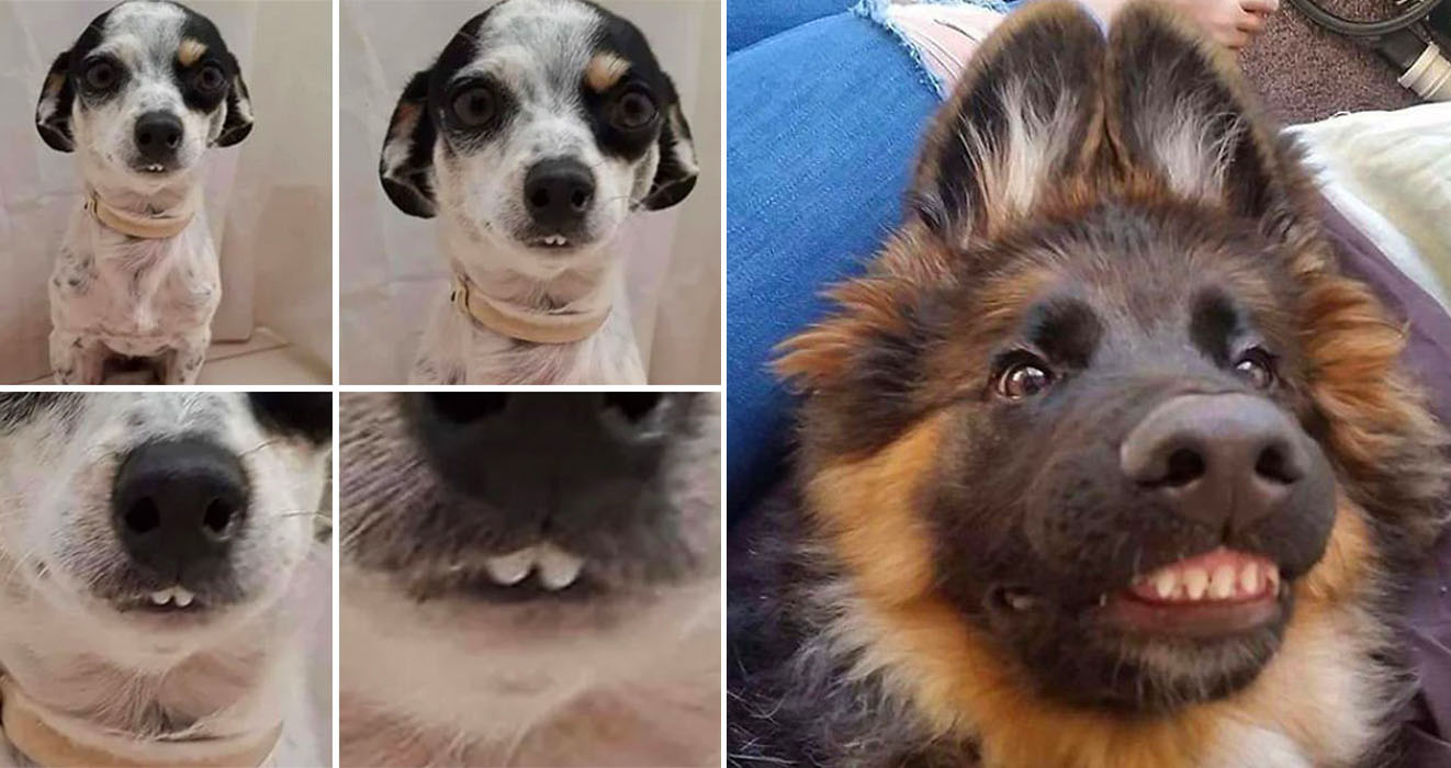 There S An Online Community That Shares Hilarious Dog Photos With Their Teeth Visible In A Funny Way