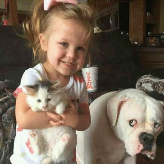 funny dog snapchats face of jealousy