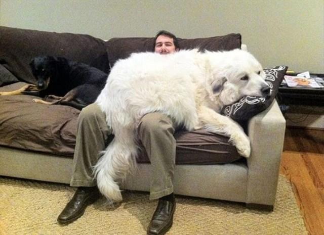 funny dog snapchats polar bear