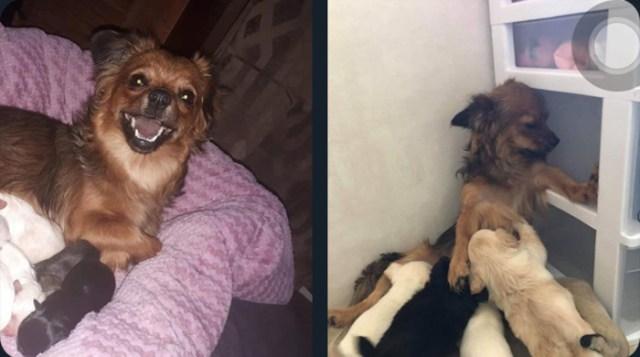 hilarious pet photos motherhood transformation