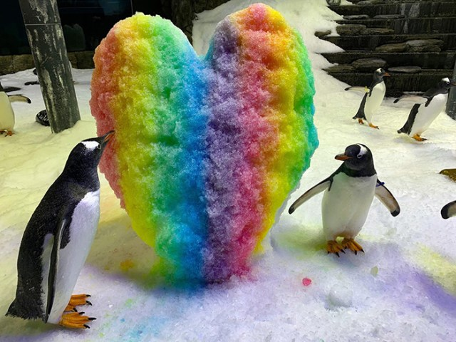 gay penguins sphen and magic
