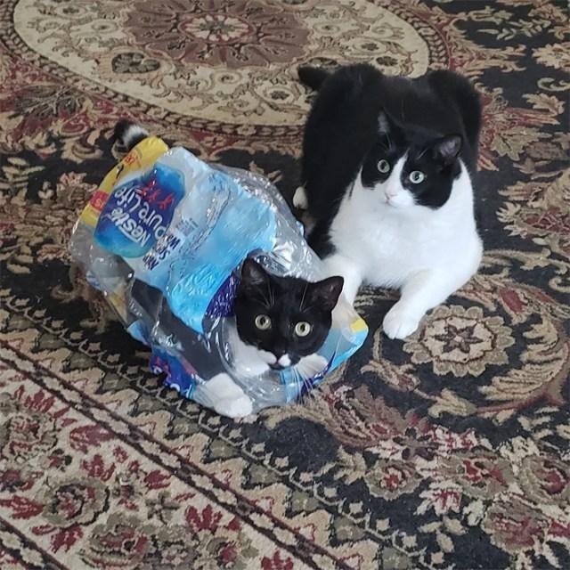 cat stuck in plastic