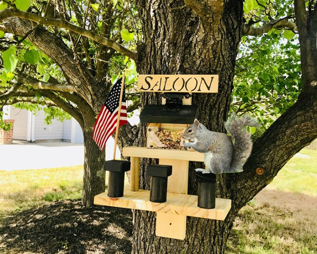jacksonstimber saloon for squirrel
