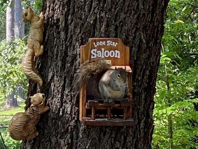 withliftedhandsy wooden squirrel saloon