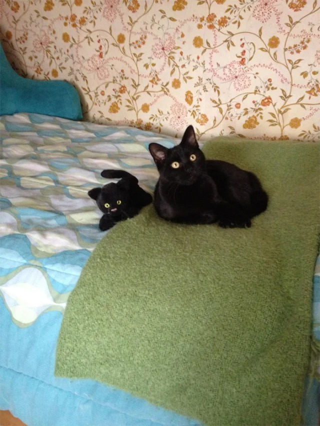 black cat and mini me