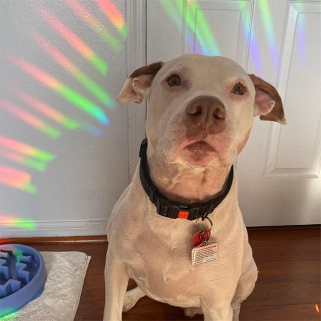 decal rainbow maker