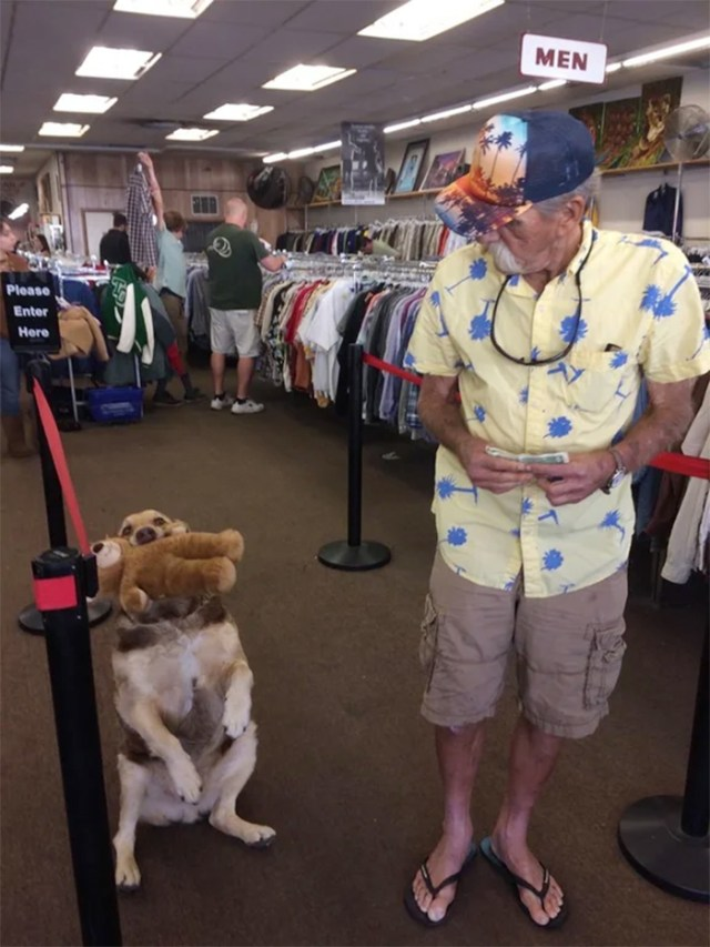 dog brings teddy bear to thrift store
