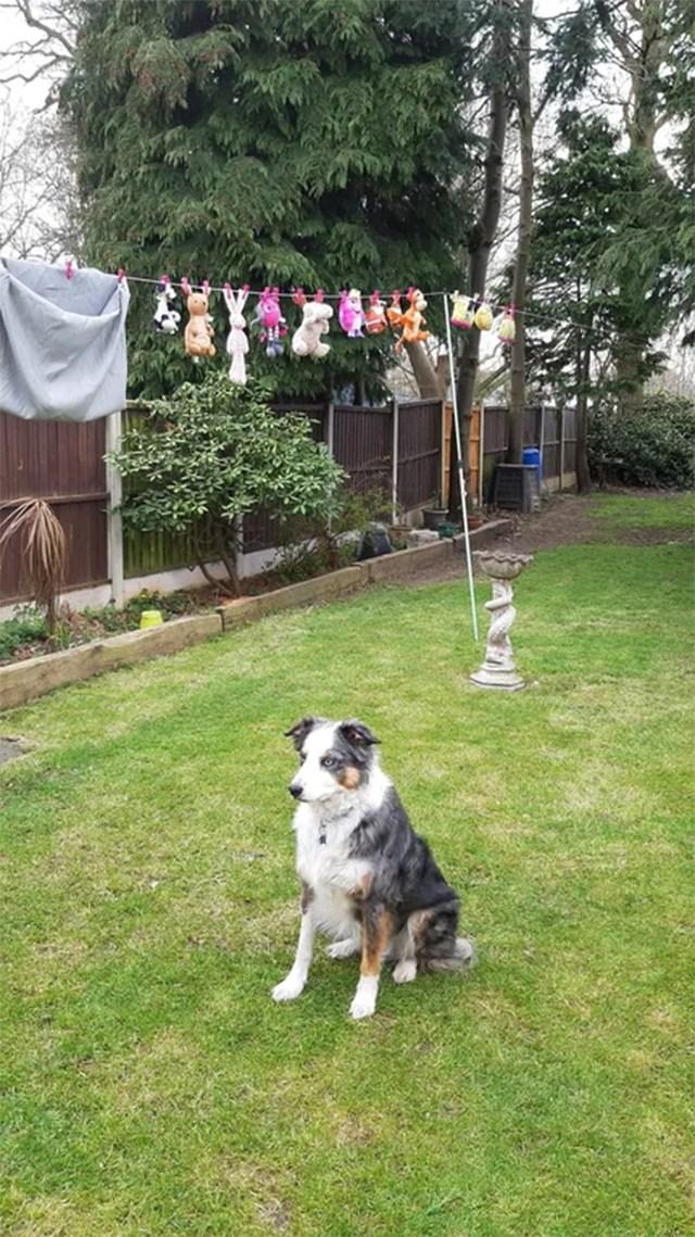 dog guards hanging plushies