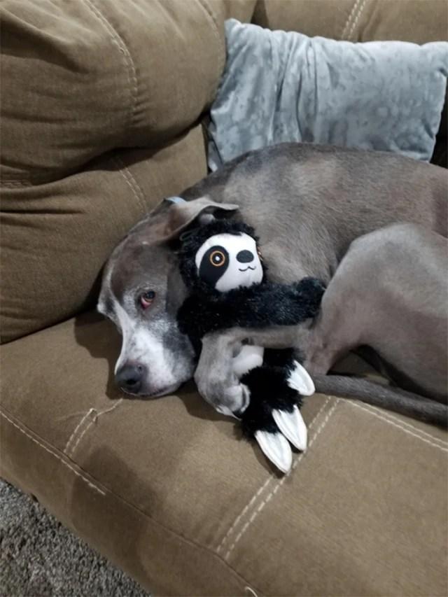 dog loves stuffed sloth