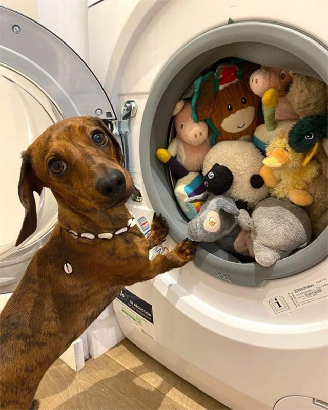 pets with their favorite toys washer