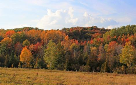 A Fall Color Tour on the Highways and Byways of Leelanau County