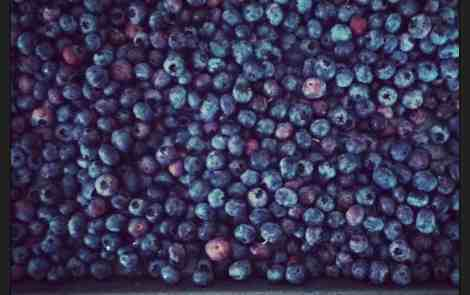 Ask A Michigander: Did I miss blueberry season?