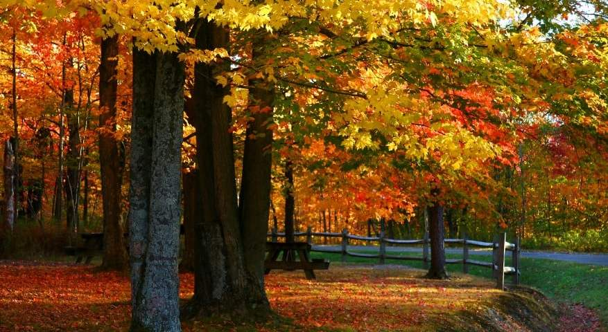 10 Ways to Make the Most of Autumn Around Detroit