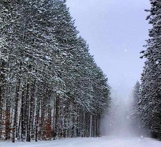 Michigan Bucket List: 5 Ideas for a Winter Date Night in Mid-Michigan
