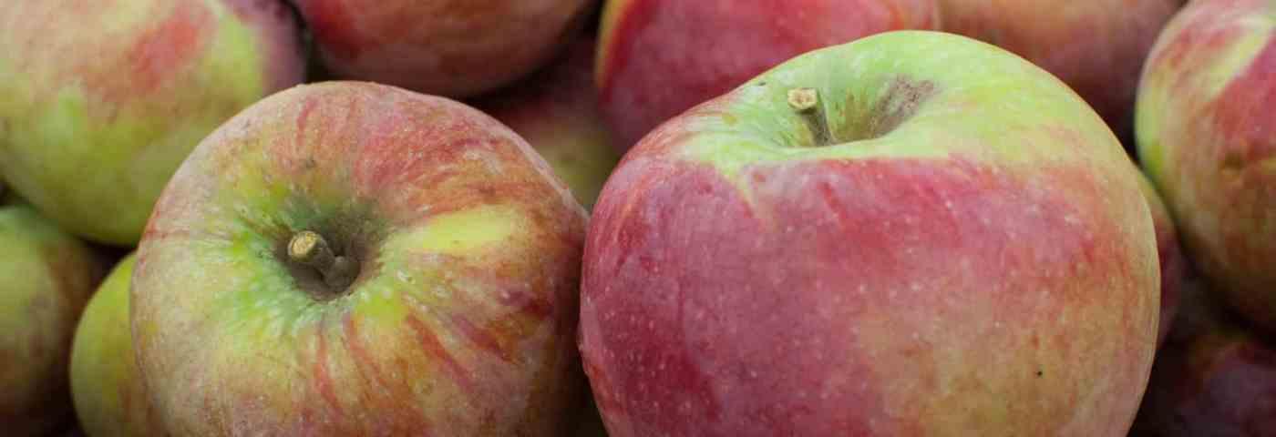 Michigan Apples Make Delicious Fall Recipes