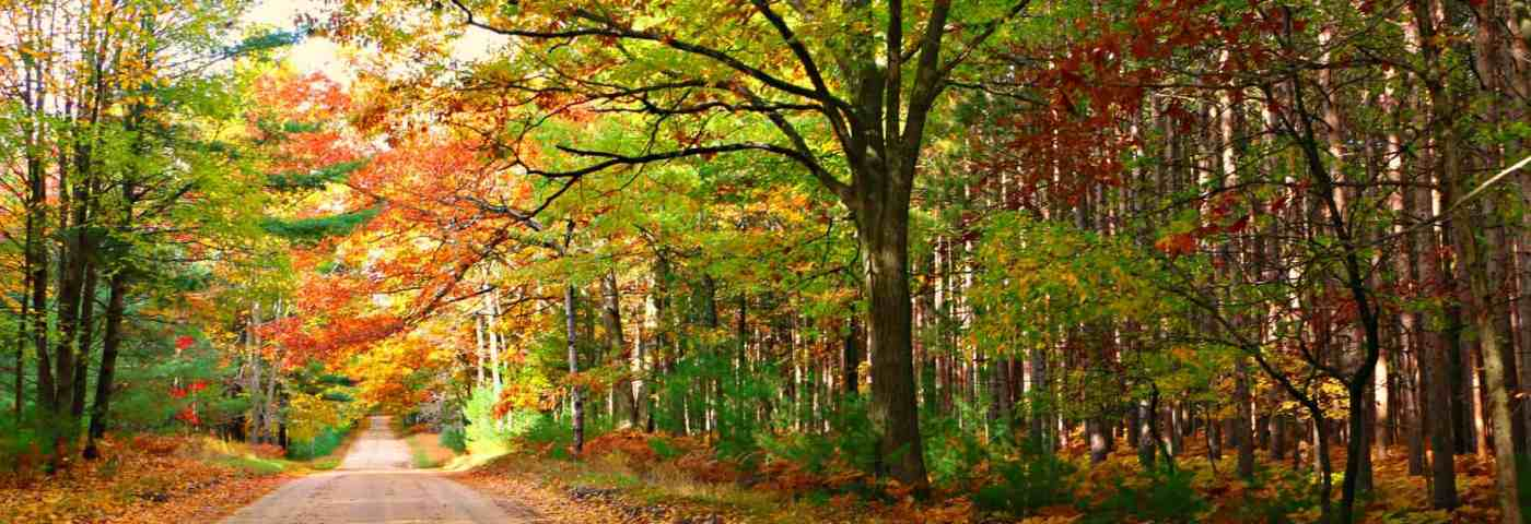 4 Michigan Drives To Make The Most Of Fall