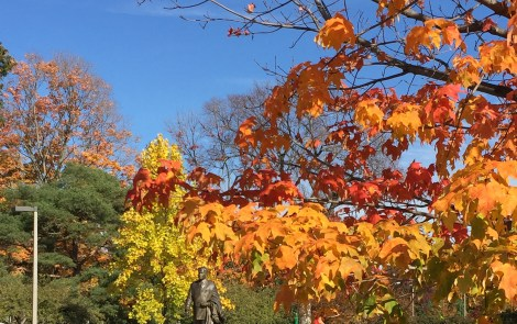 A Guide to Color Tours Around Mid-Michigan