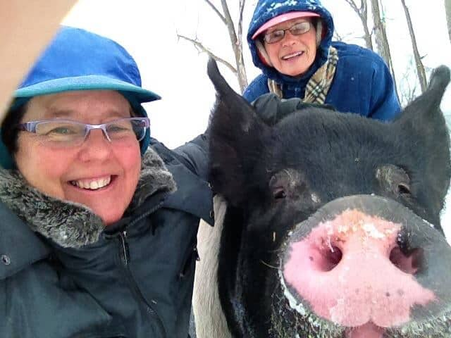 Celebrating Pigs in Michigan!
