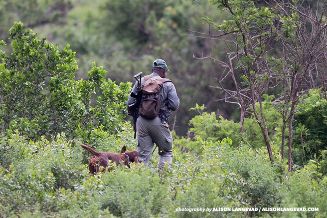 An ranger and his tracker dog in pursuit of rhino poachers