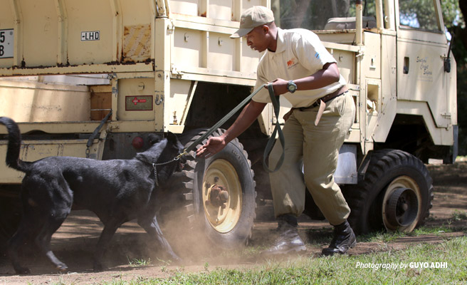 Photo of sniffer dog and handler team demonstrating ivory detection on vehicle