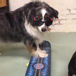 A Whole New Dog dog training