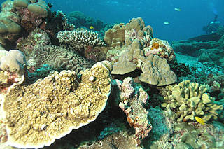 A healthy reef off the coast of Thailand