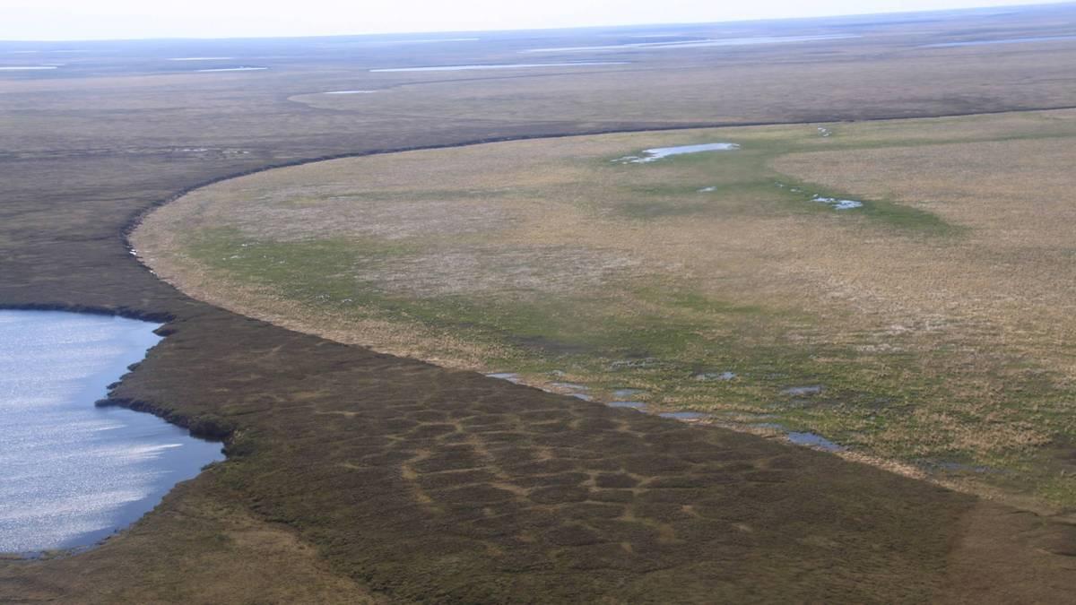 Luftbild eines vor wenigen Jahren drainierten Thermokarstseebeckens auf der nördlichen Seward Halbinsel mit deutlich unterschiedlicher Vegetation im Vergleich zur umgebenden Landschaft