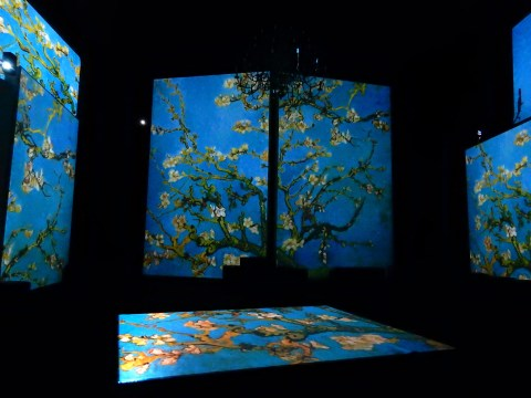 Van Gogh Alive exhibition in Wroclaw, Poland. Cherry blossoms