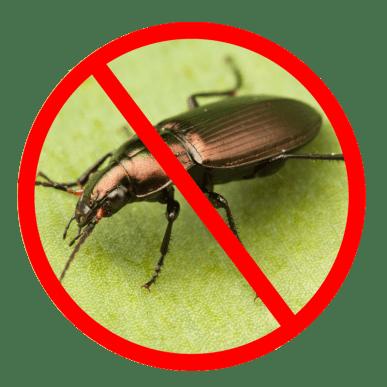 افضل شركة مكافحة حشرات بجدة