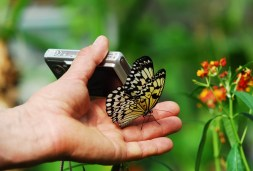 Language learning strategy photograph: A hand holding a camera with a butterfly on it taking a picture of a flower.
