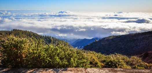 A sea of clouds on our way to the highest point of La Palma.