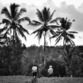 Locals watching the sunset over the rice paddies in Tegallalang, Bali.