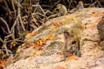 Monkeys in Rinca Island, Komodo National Park, Indonesia