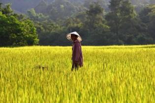 Arrozales Laos - Como viajar indefinidamente - Entrevista a Claudia Rodriguez Solo Ida - A World to Travel